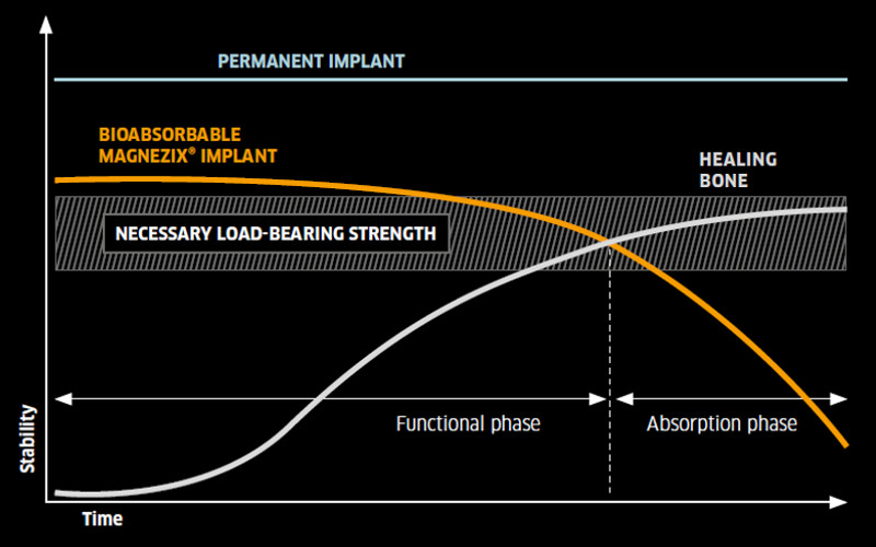 The degradation behavior in relation to the load bearing capacity of the bone.